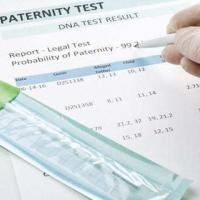 Tampa Florida Paternity Lawyers & Family Lawyers